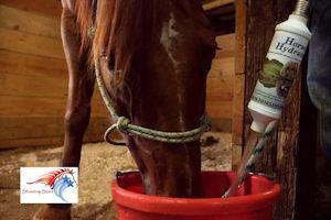 HorseHydrator2