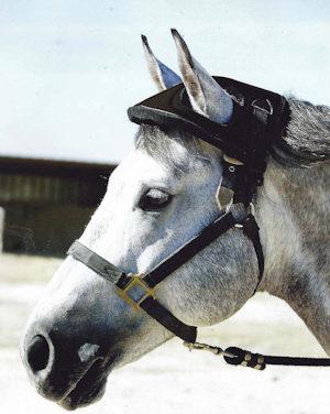 horsehelmet