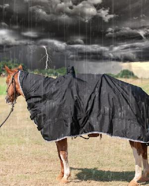 horseinrain