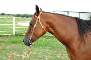 Pony Bridle with Crossed Pistol Conchos